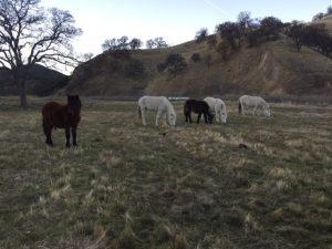 Wilbur Ponies 12.6.17