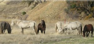 The Robinson Creek Ponies